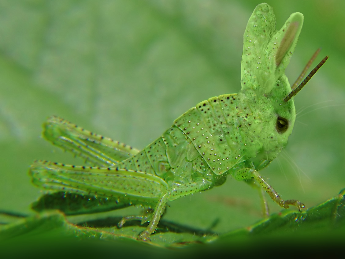 Grasshopper/insect/gallery/mowers/collections/poster/