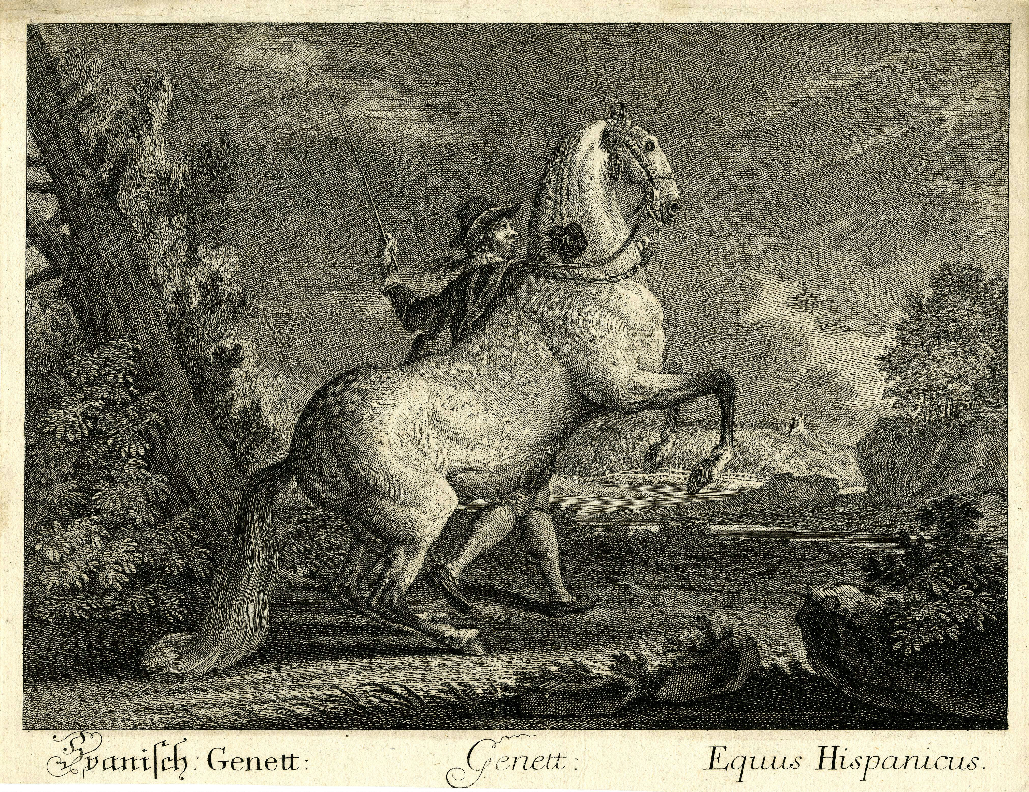 Genete - Horse Scanner