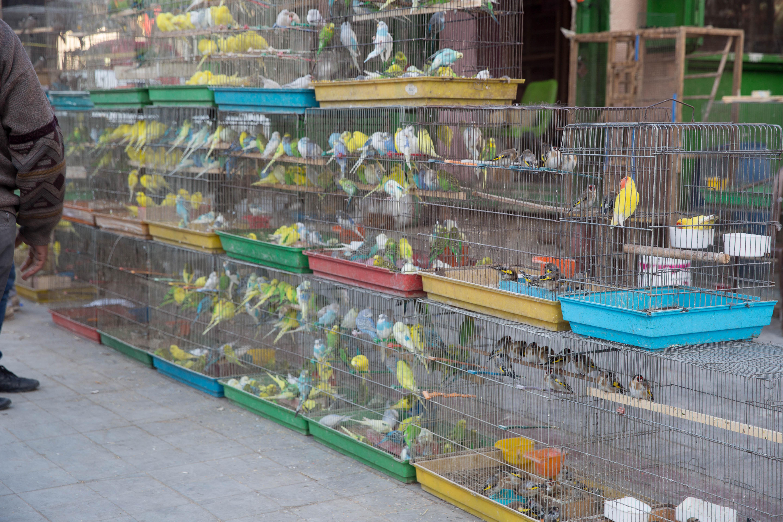 1fe164810 طيور للبيع في سوق الغزل حيث تباع فيه الحيوانات المنزلية الأليفة