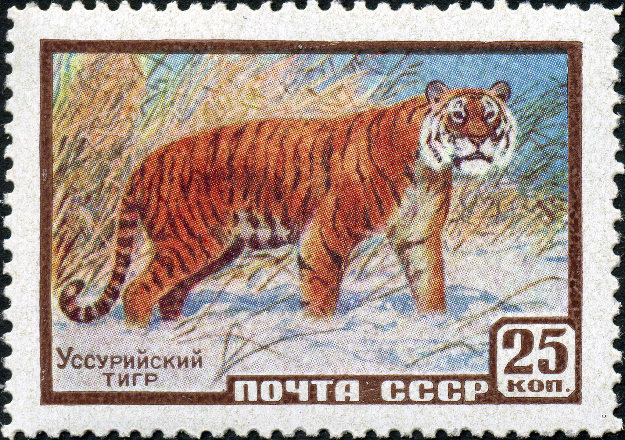 File:The Soviet Union 1959 CPA 2326 stamp (Siberian Tiger).jpg