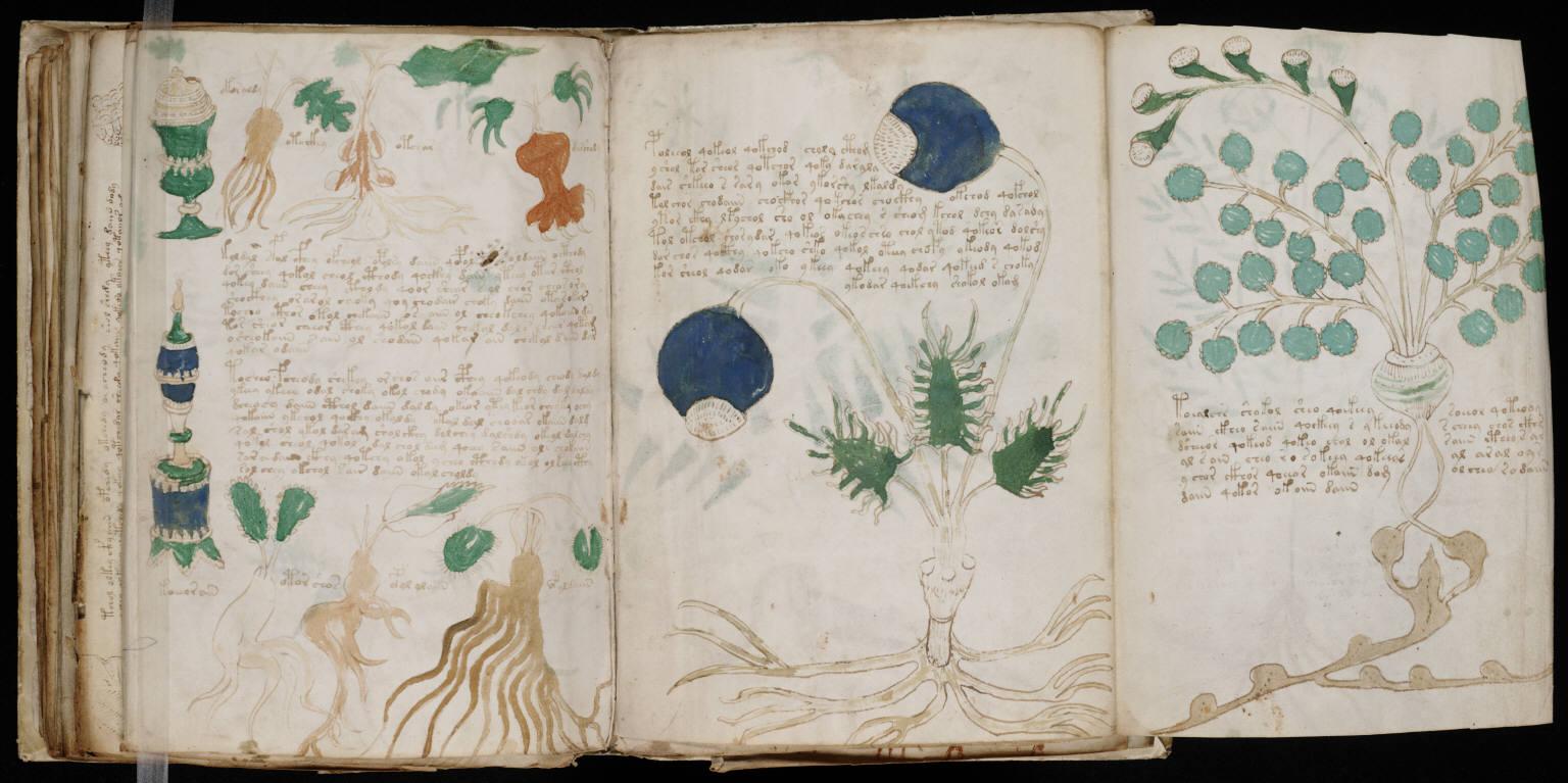 Voynich Manuscript Yale File Voynich Manuscript 164
