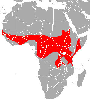 [Image: Yellow-winged_Bat_area.png]