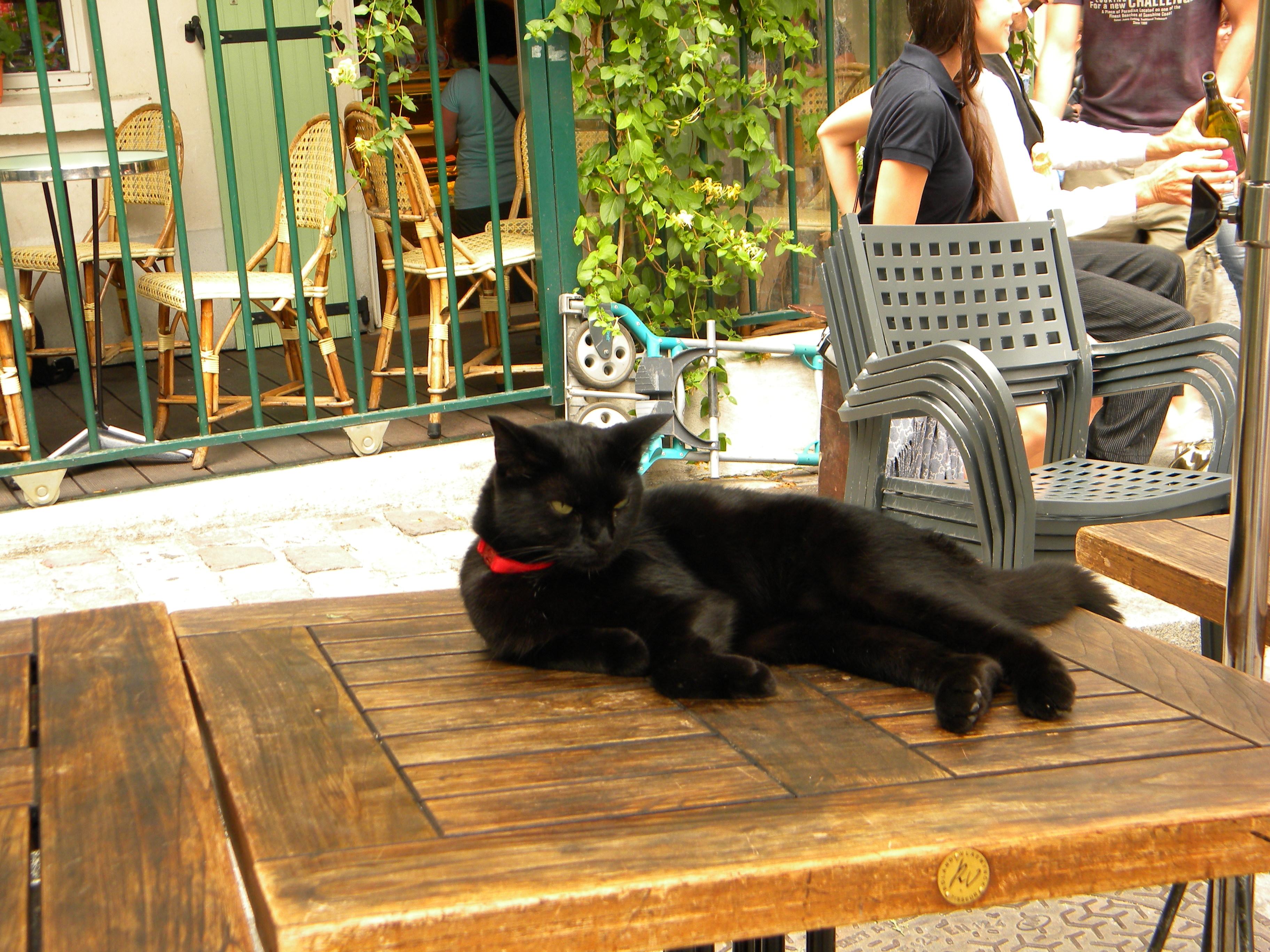 Монмартр кот