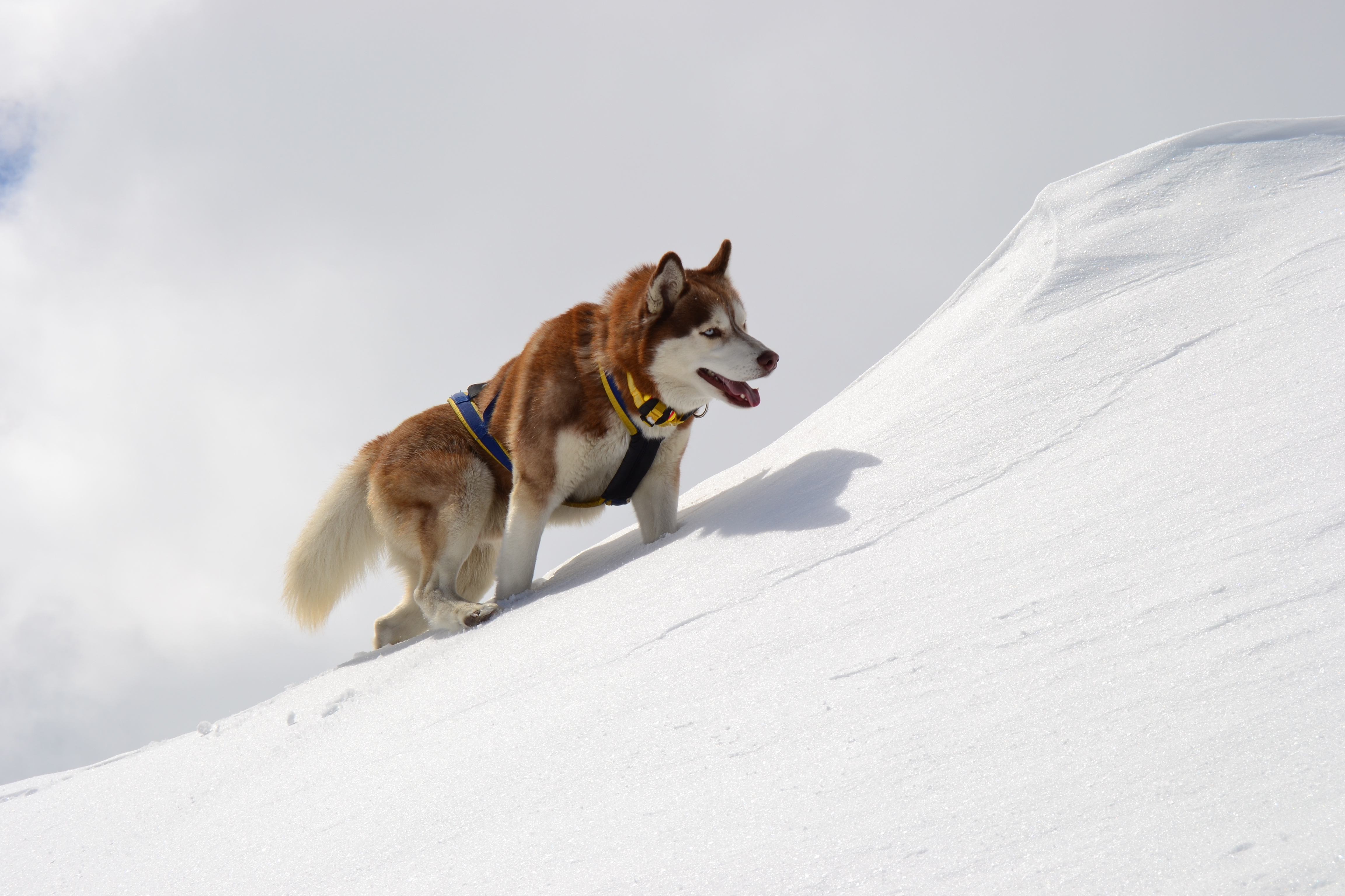 Snow Dogs Free Online