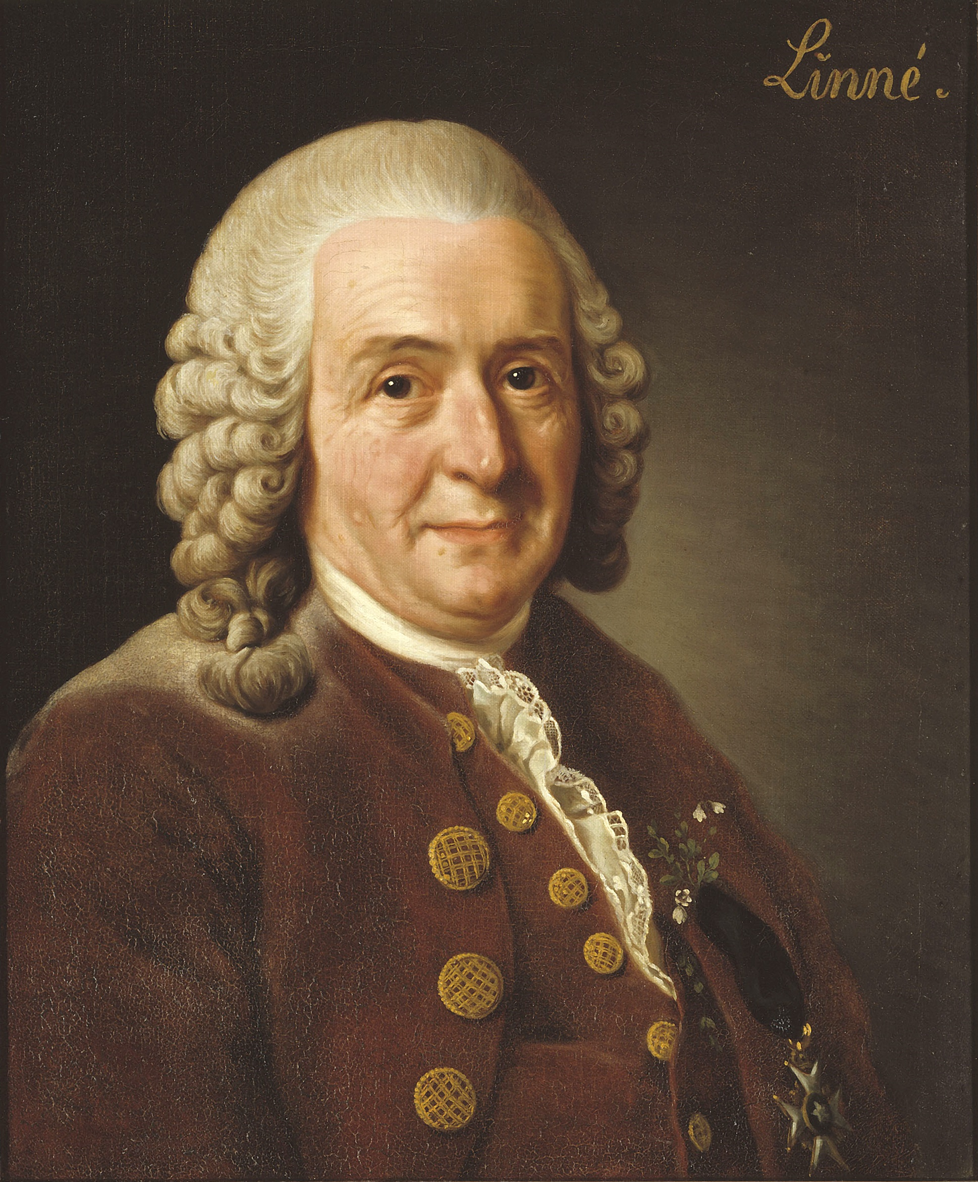 Carl von Linné, Alexander Roslin, 1775. Currently owned by and displayed at the Royal Swedish Academy of Sciences.