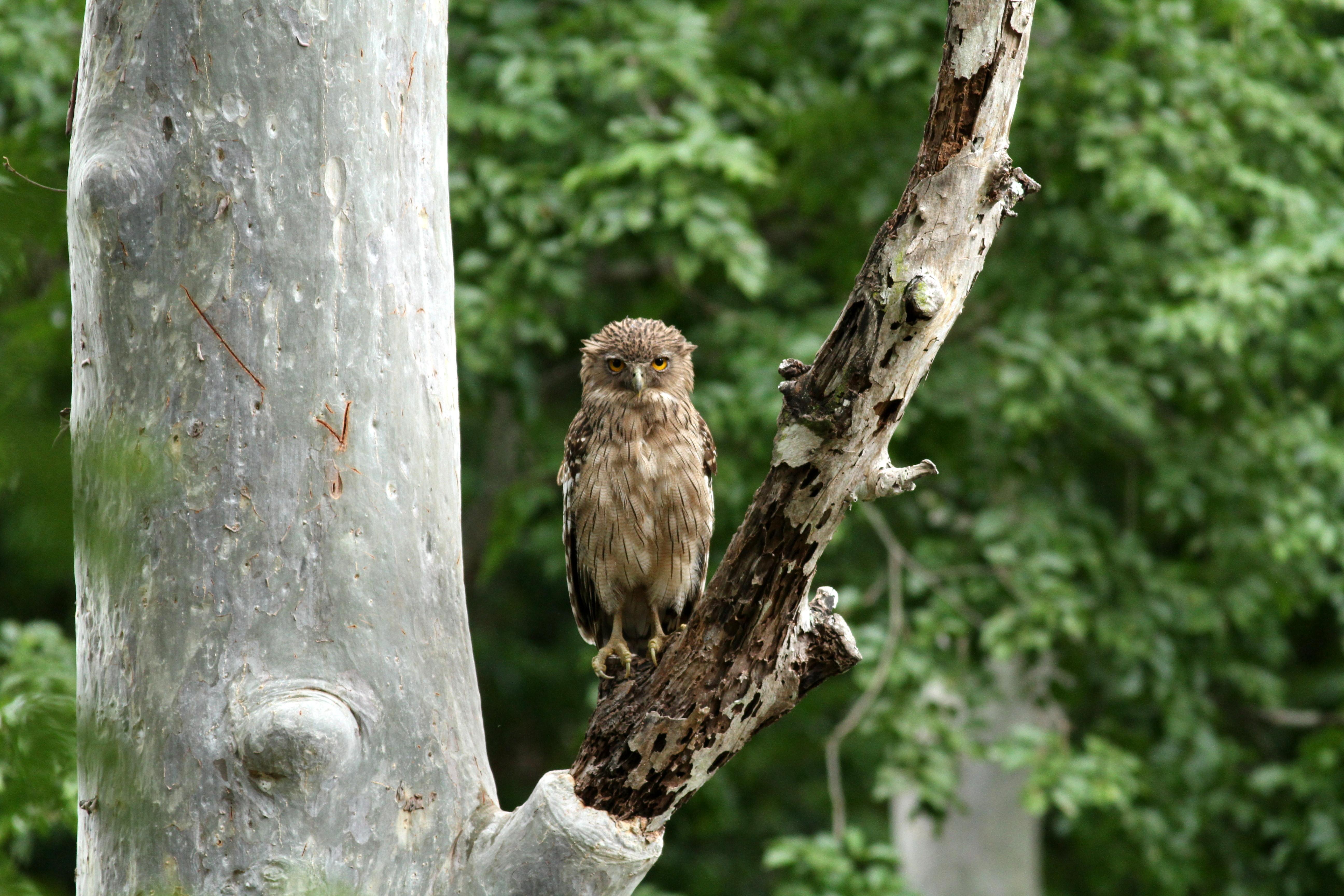 File:Chinnar Wildlife Sanctuary IMG 9072 (32) JPG