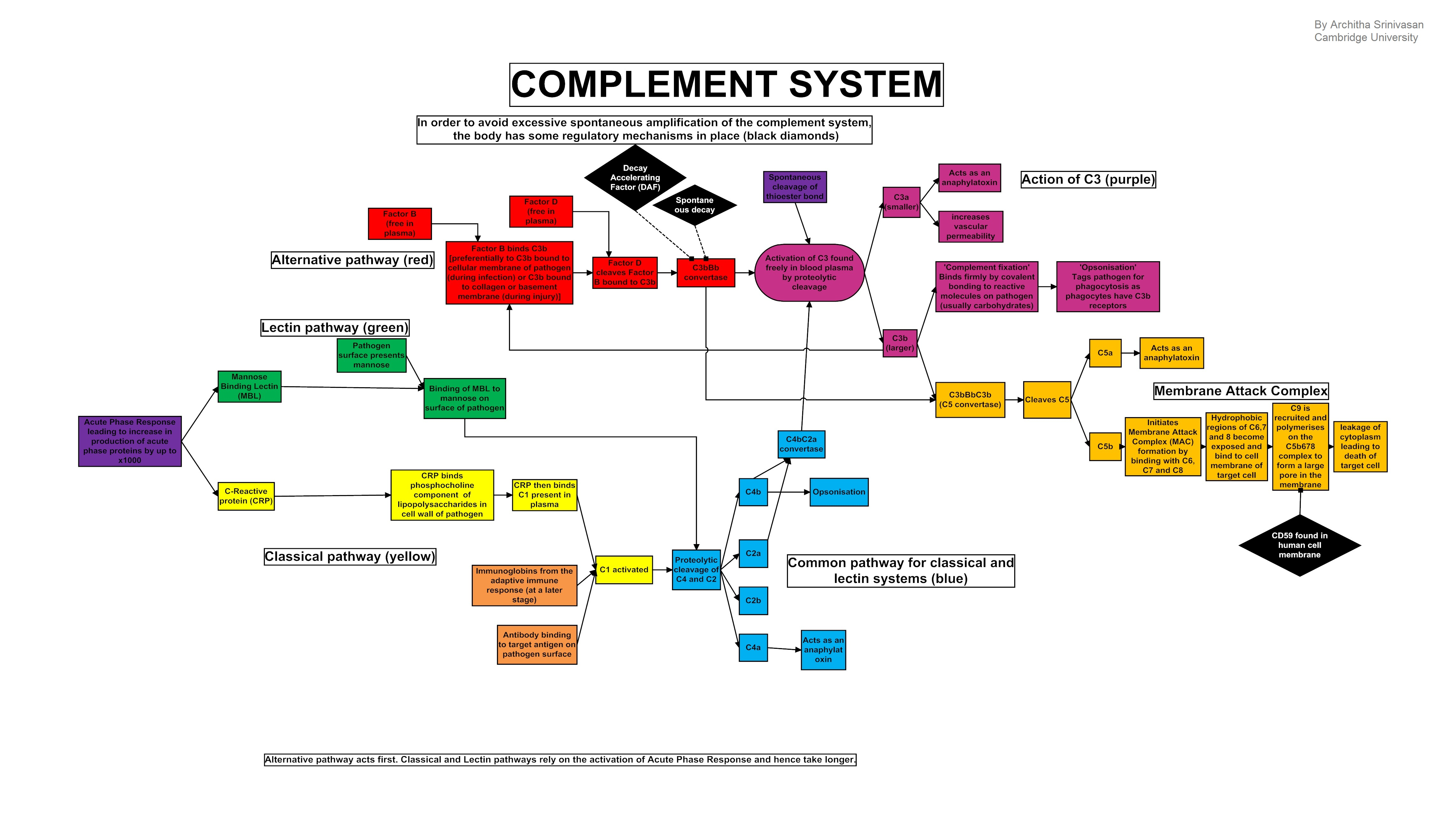 Action Flow Chart: Complement system.jpg - Wikimedia Commons,Chart