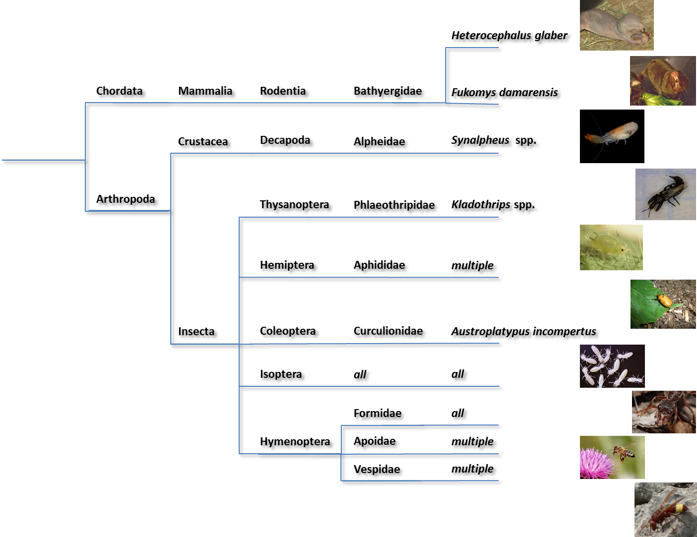 Filediagram Of Eusocial Speciespng - Wikimedia Commons-3043