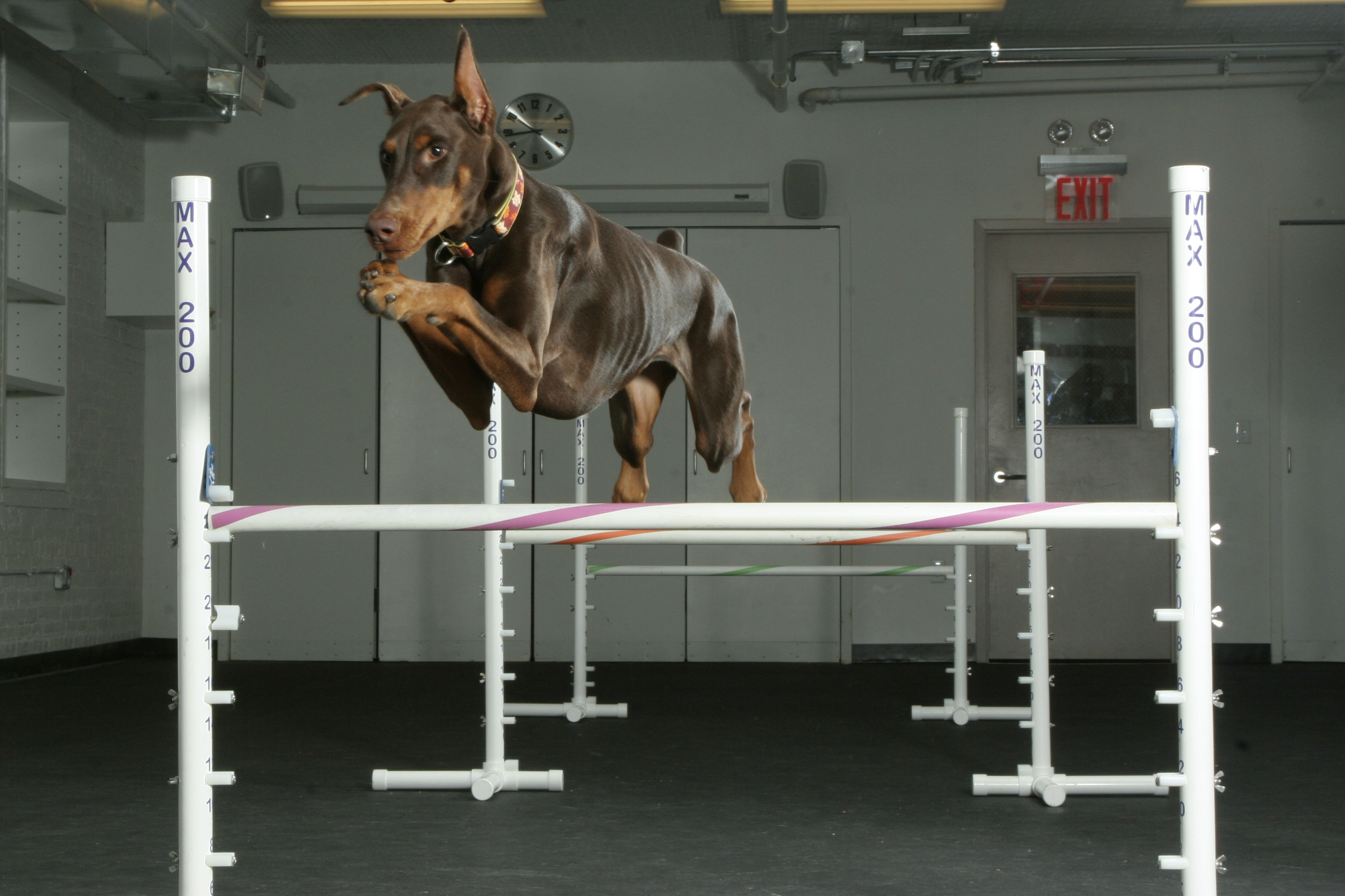 Dog Agility Training Palmyra Va