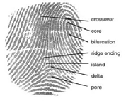 Elements of a fingerprint from official DoD sl...