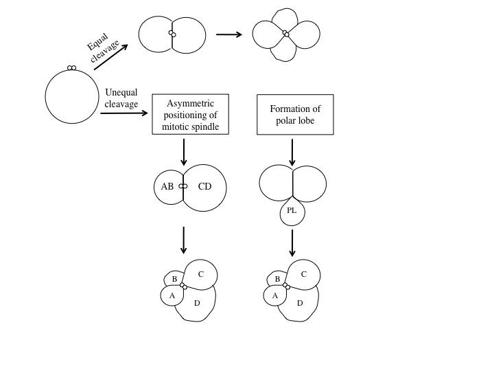 view Betriebliche Expertensystem Anwendungen: Eine Materialsammlung
