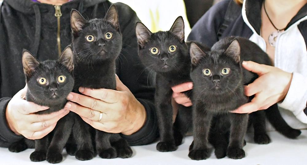 Black cat summary