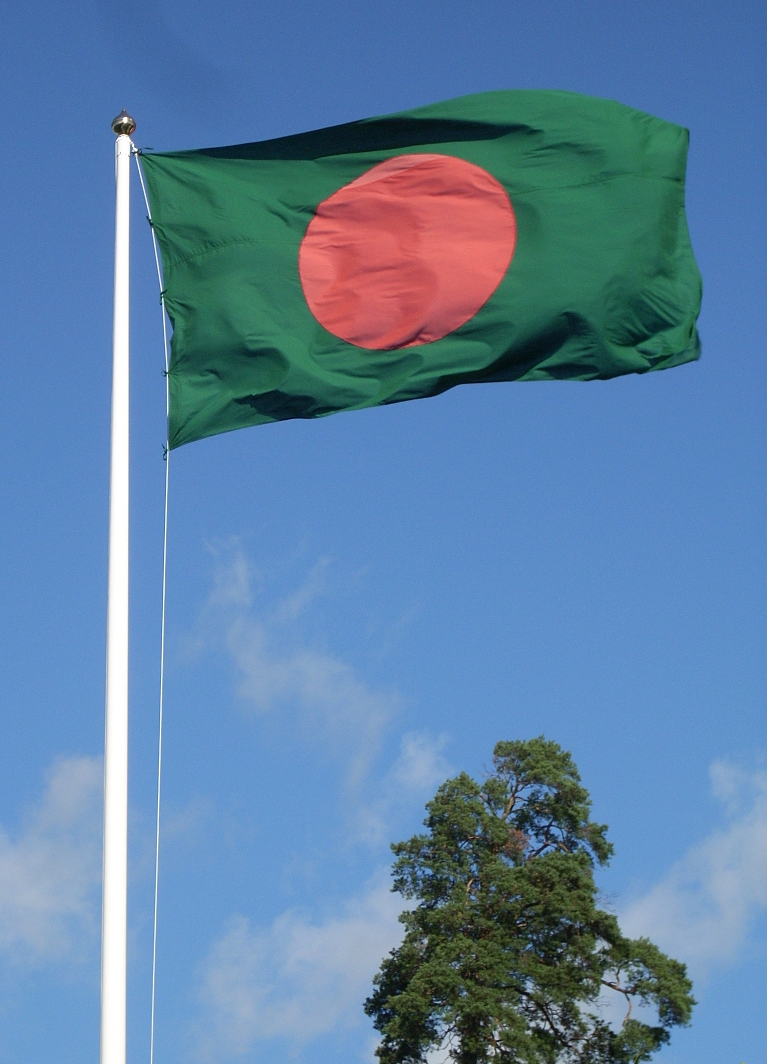 http://upload.wikimedia.org/wikipedia/commons/6/68/Flag_of_Bangladesh_and_tree.jpg