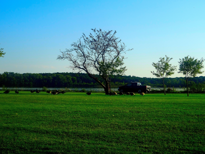 Spring In Vilas Park >> File Geese In Vilas Park Panoramio 4 Jpg Wikimedia Commons