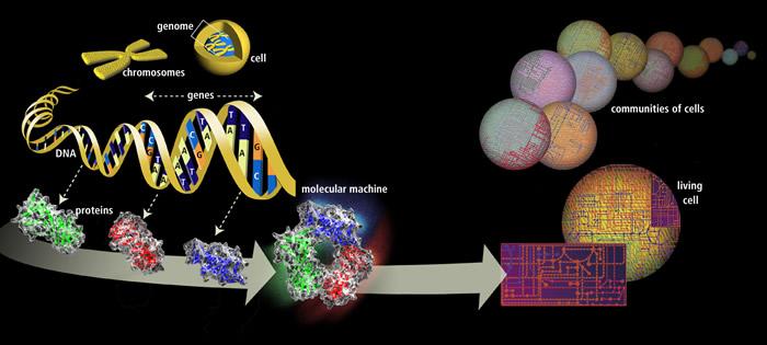 Resultado de imagen de El genoma