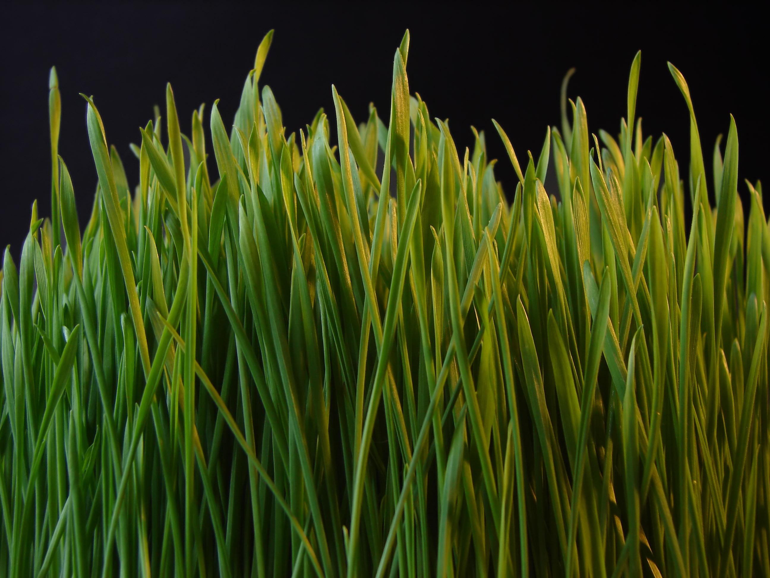 short essay on grass