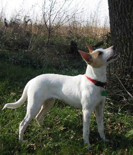 Dog Kennels Long Island New York