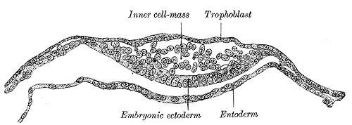 Depiction of Ectodermo