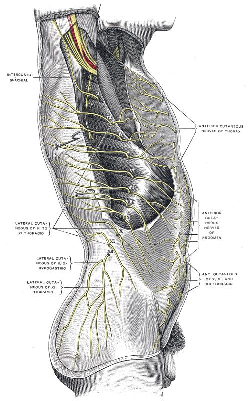 Filegray820g Wikimedia Commons