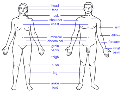 Here are the names of the body parts of a woman and a man