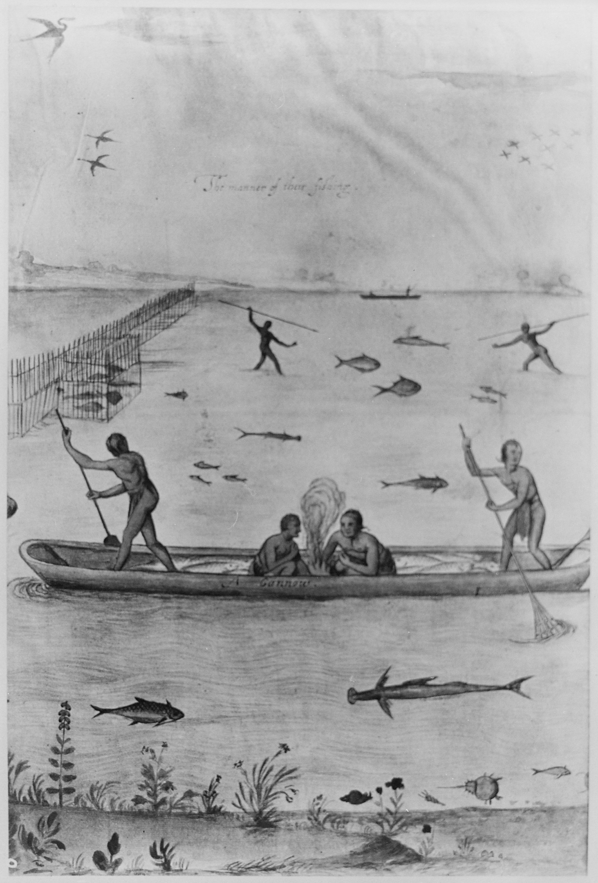 North Carolina Fish Size Regulations http://commons.wikimedia.org/wiki/File:Indians_in_North_Carolina_fishing_with_traps,_spears,_and_nets,_1885_-_NARA_-_535743.jpg