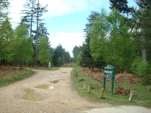 Knightwood Oak, New Forest - geograph.org.uk - 1300352