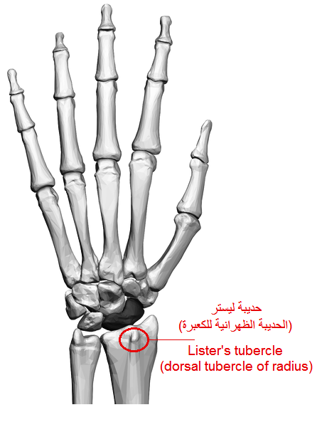 Listers Tubercle Wikiwand