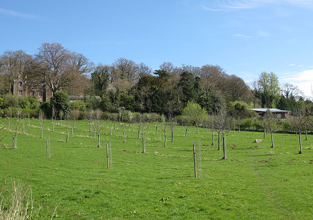 Newly planted orchard - geograph.org.uk - 1248403