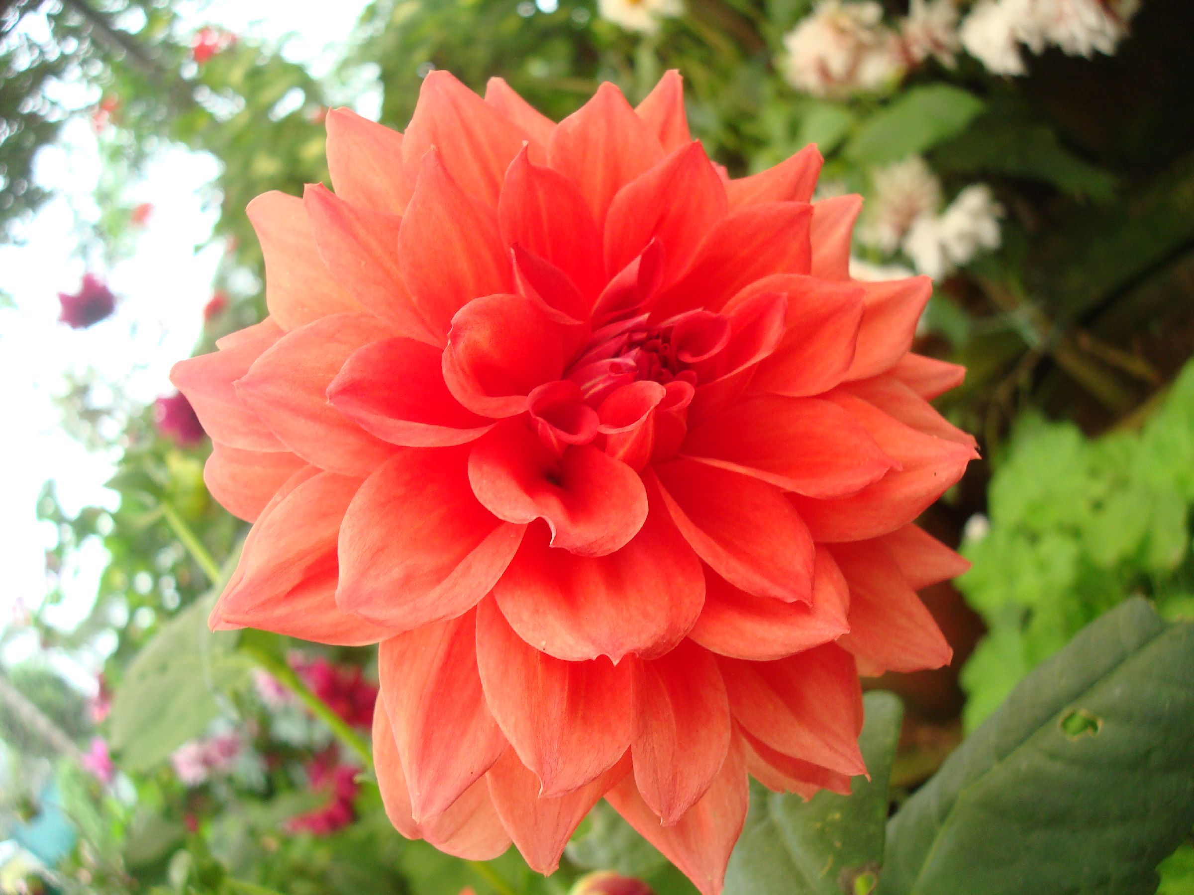File Orange colored flower JPG