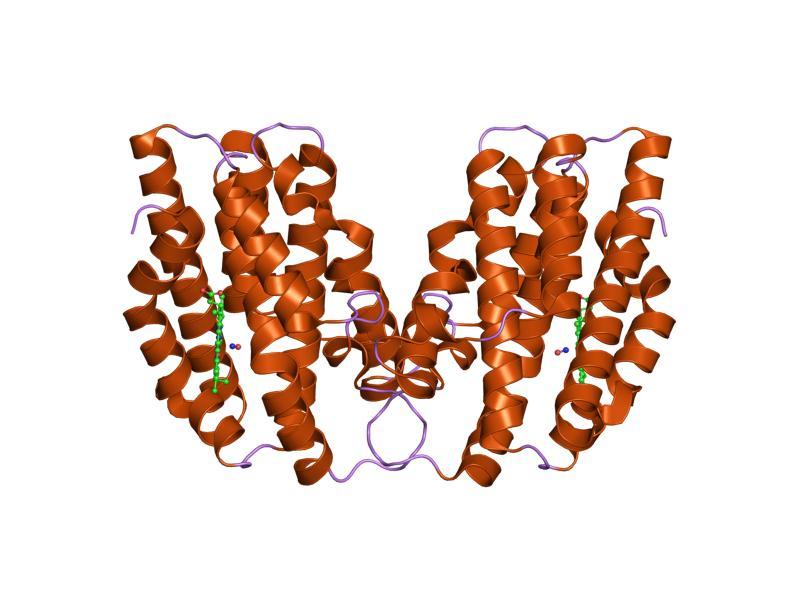 loading image for Heme oxygenase