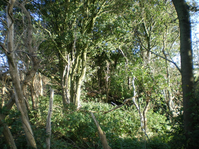 Part of The Rein boundary works - geograph.org.uk - 998394
