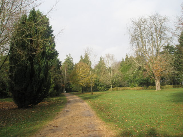 Path within Staunton Country Park - geograph.org.uk - 1591834