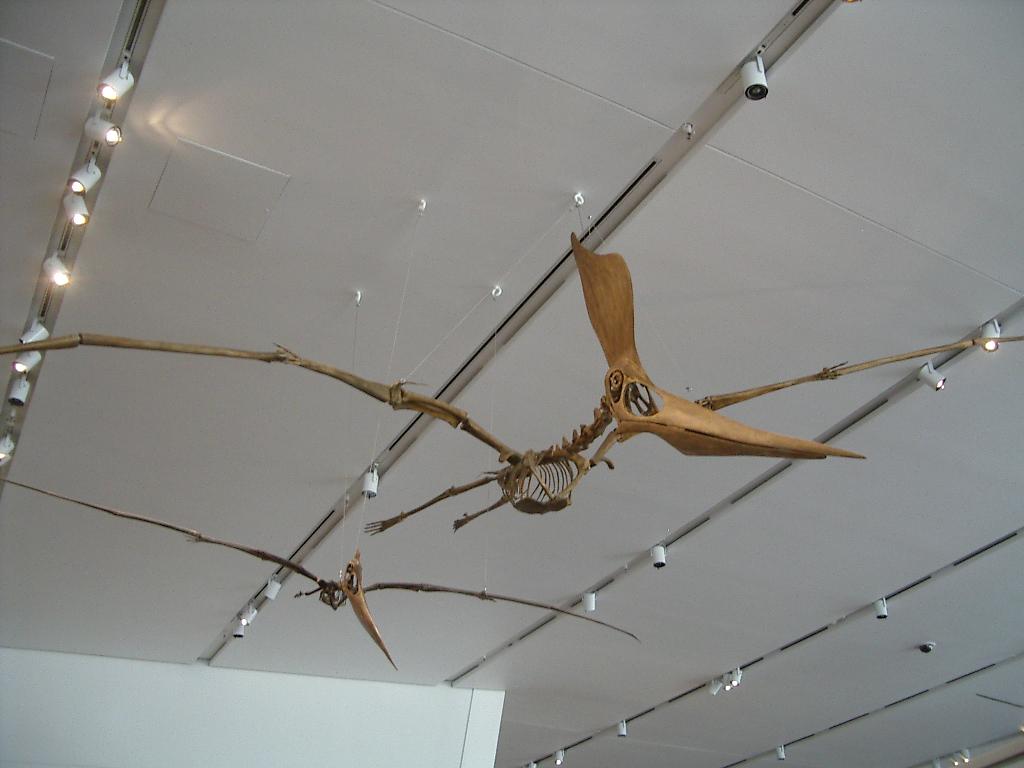 pterosaure-credit-photo-saku-takakusaki_20551_w250