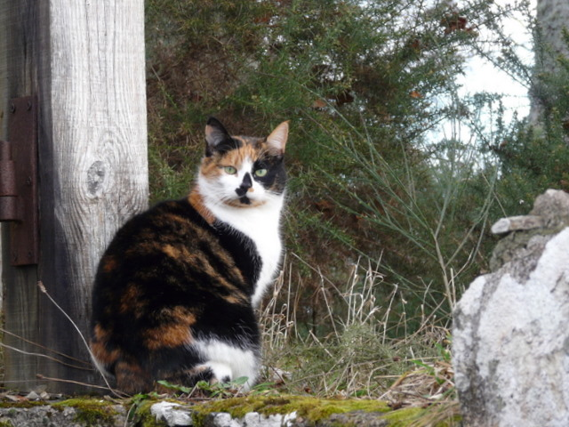 File:Sentinel cat at Whiteface - geograph.org.uk - 1173490.jpg