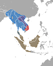 Range map showing ranges of the three species of slow loris: the Sunda Loris (N. coucang) in Thailand, Malaysia, and Indonesia; the Bengal slow loris (N. bengalensis) in east India, China, Bangladesh, Bhutan, Burma, Thailand, Laos, Vietnam, and Cambodia; and the pygmy slow loris (N. pygmaeus) in Vietnam and Laos.