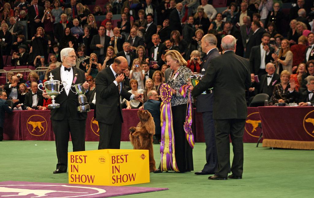 westminster kennel club dog show wikipedia