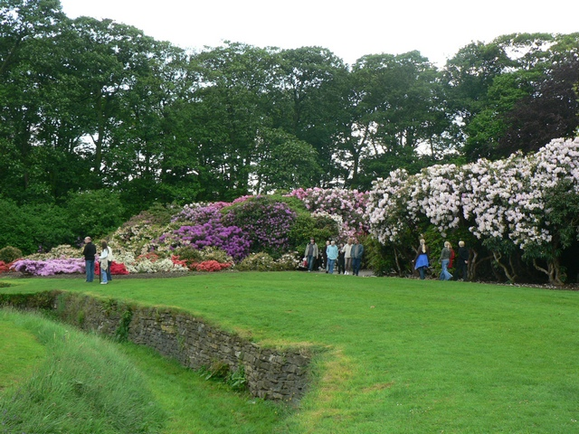 The Rhododendron Walk, Temple Newsam - geograph.org.uk - 180235