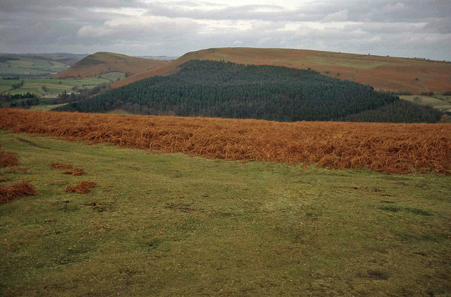 The disused racecourse on the Hergest Ridge - geograph.org.uk - 1444713