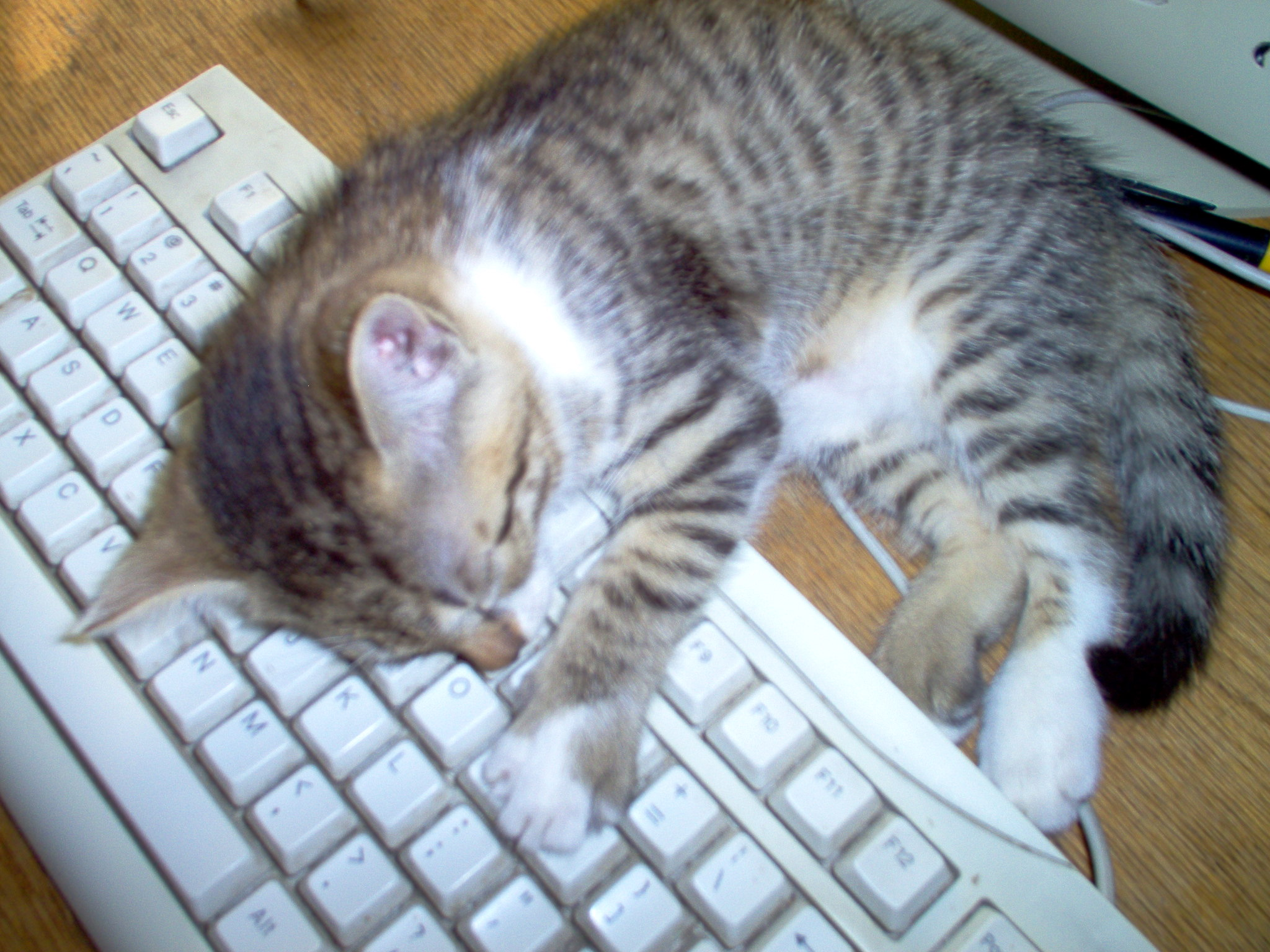 Kitten sleeping on keyboard