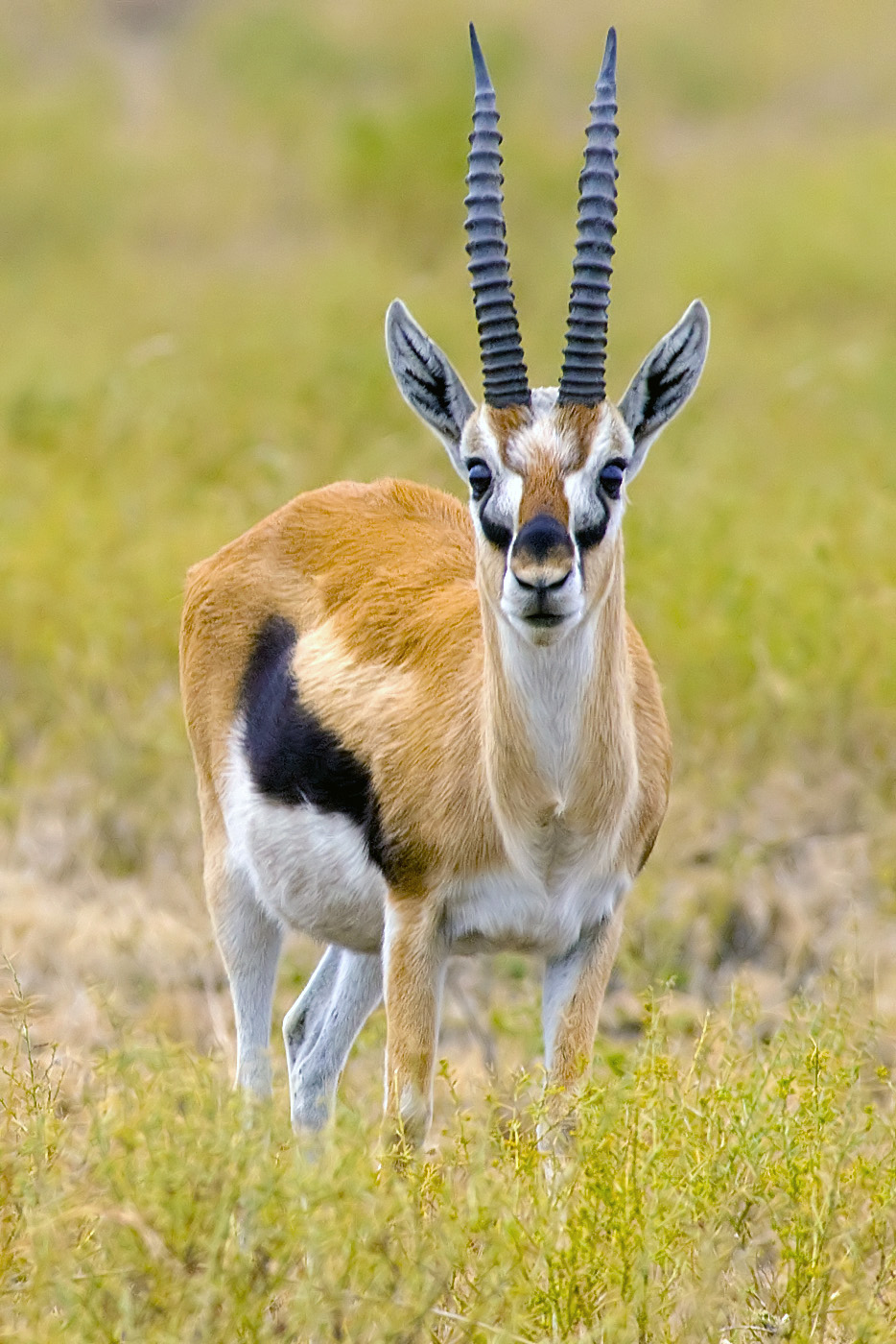 The main technical characteristics of Gazelle