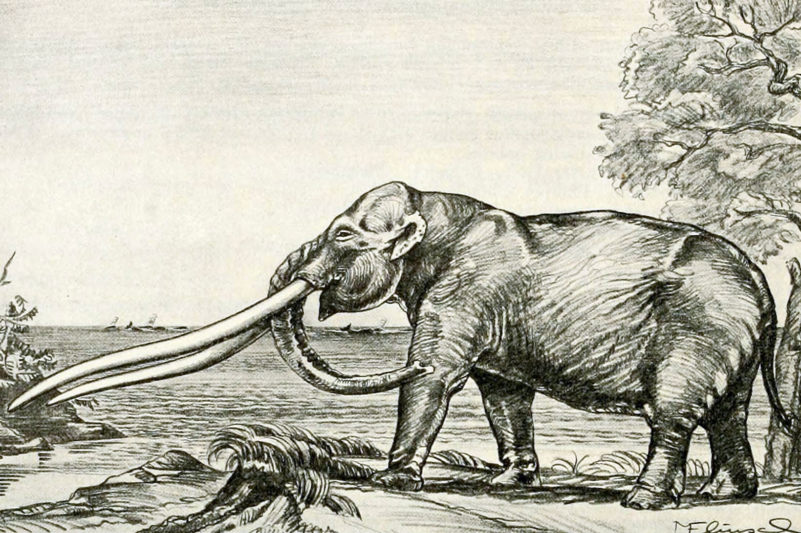 Depiction of Anancus