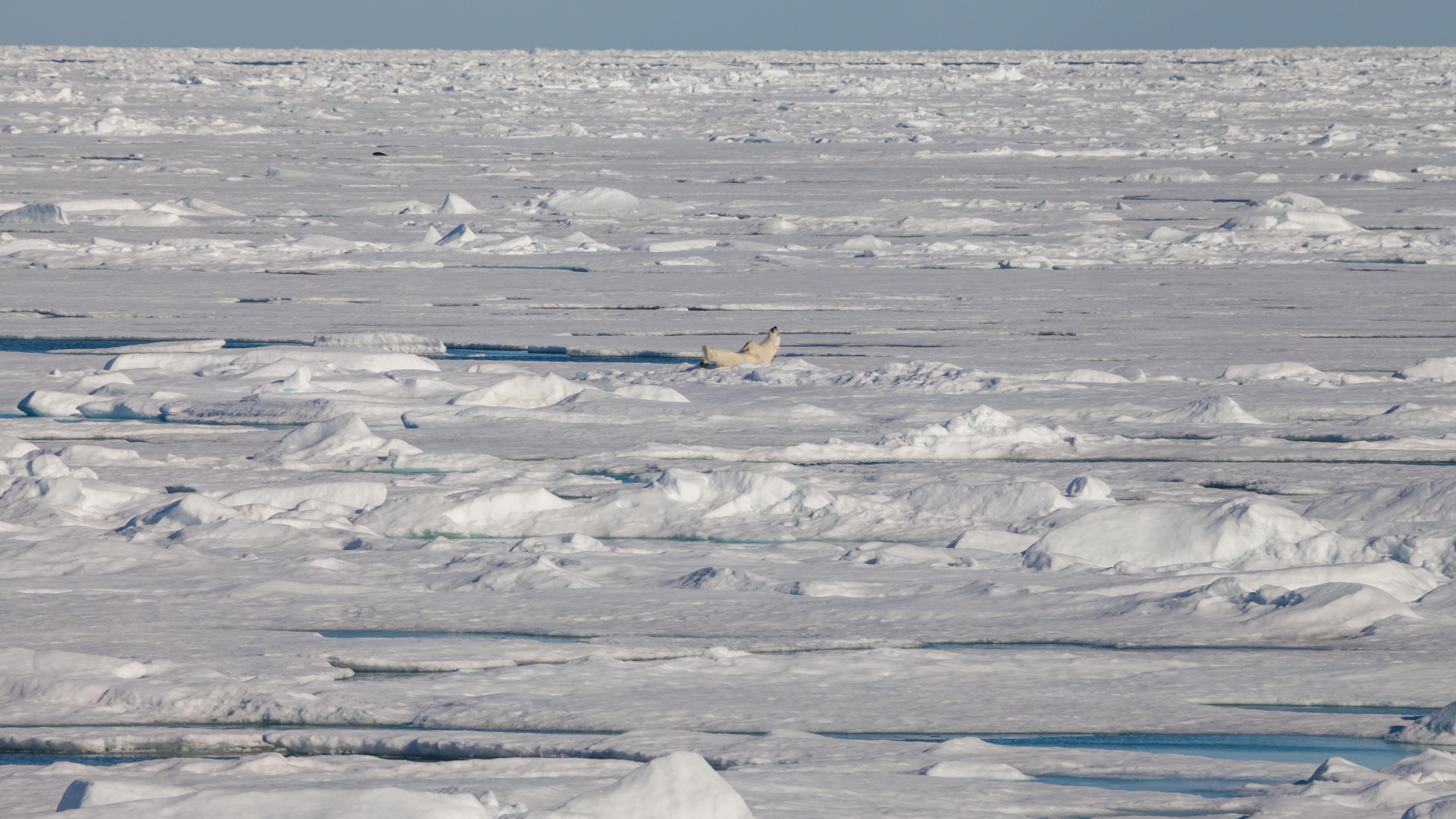 TV-Tipp: Skandinavien - Der Eisbär