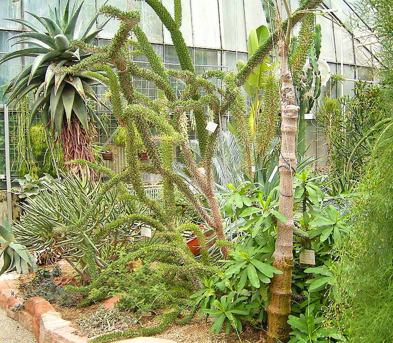Jard n bot nico de heidelberg wikipedia la enciclopedia for Jardin botanico de liubliana