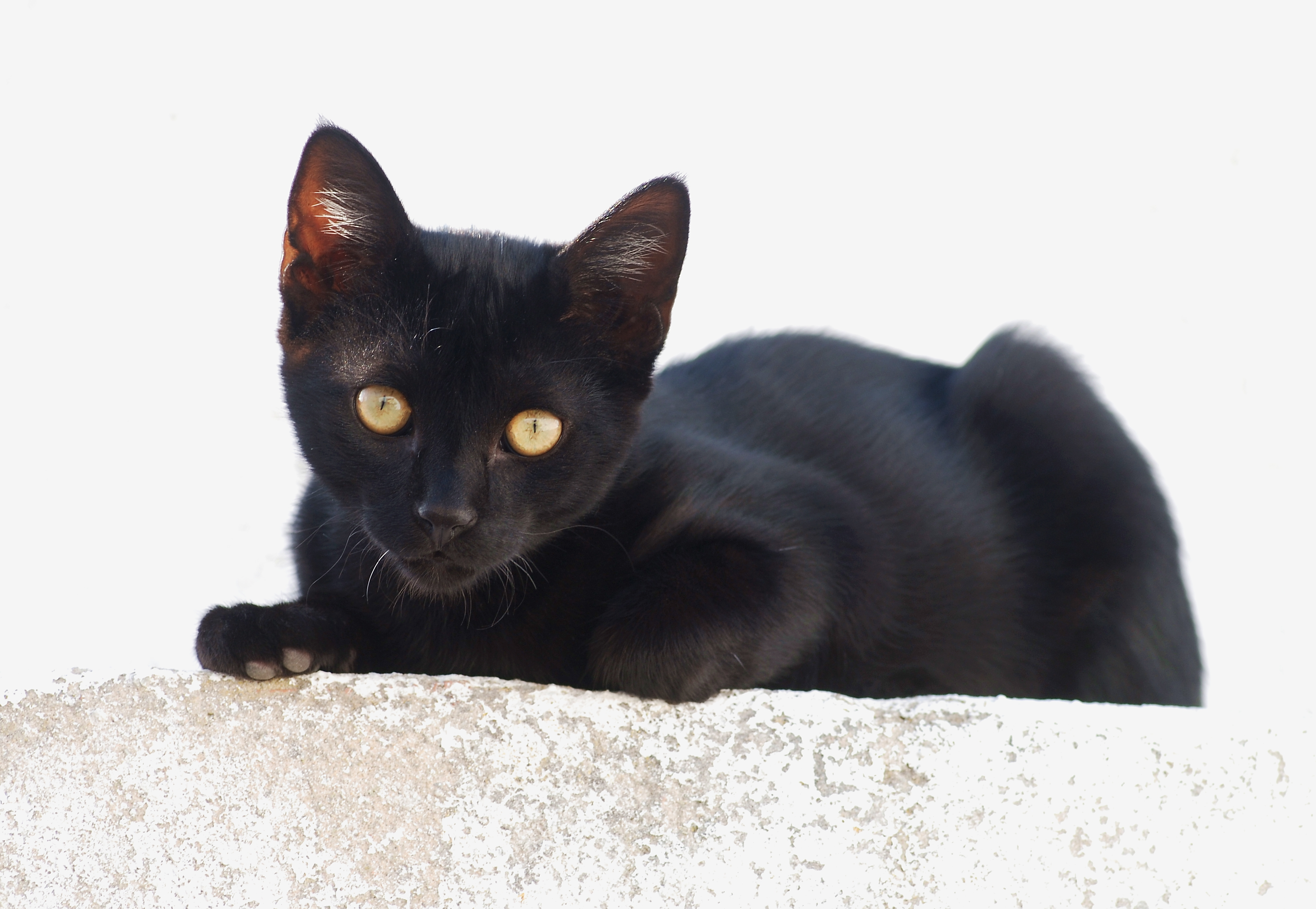 English: A black kitten at full sun against a ...