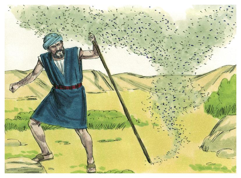 Heuschreckenplage Bibel
