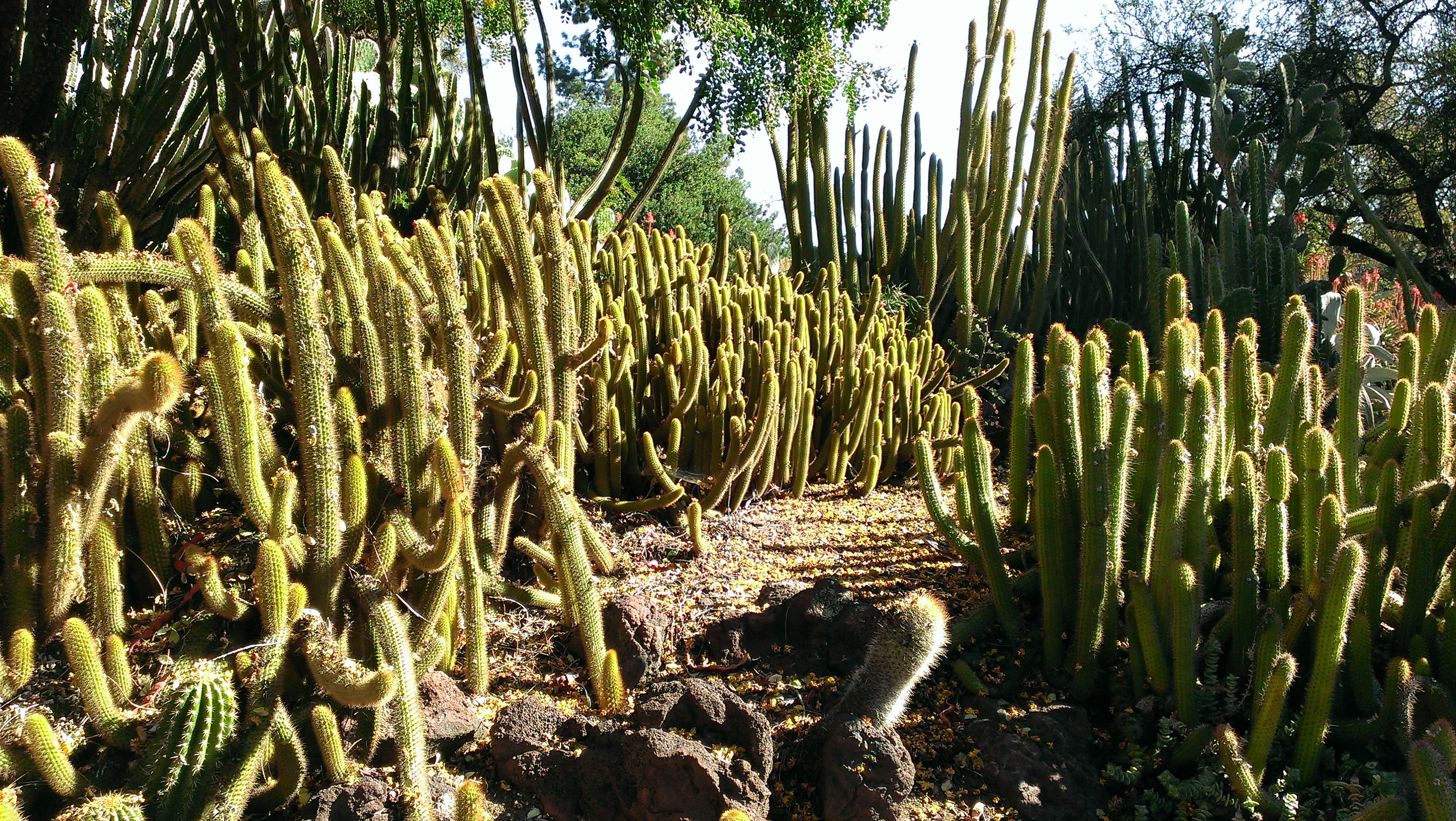 Cacti mound at Huntington Library Art Collections and Botanical Gardens