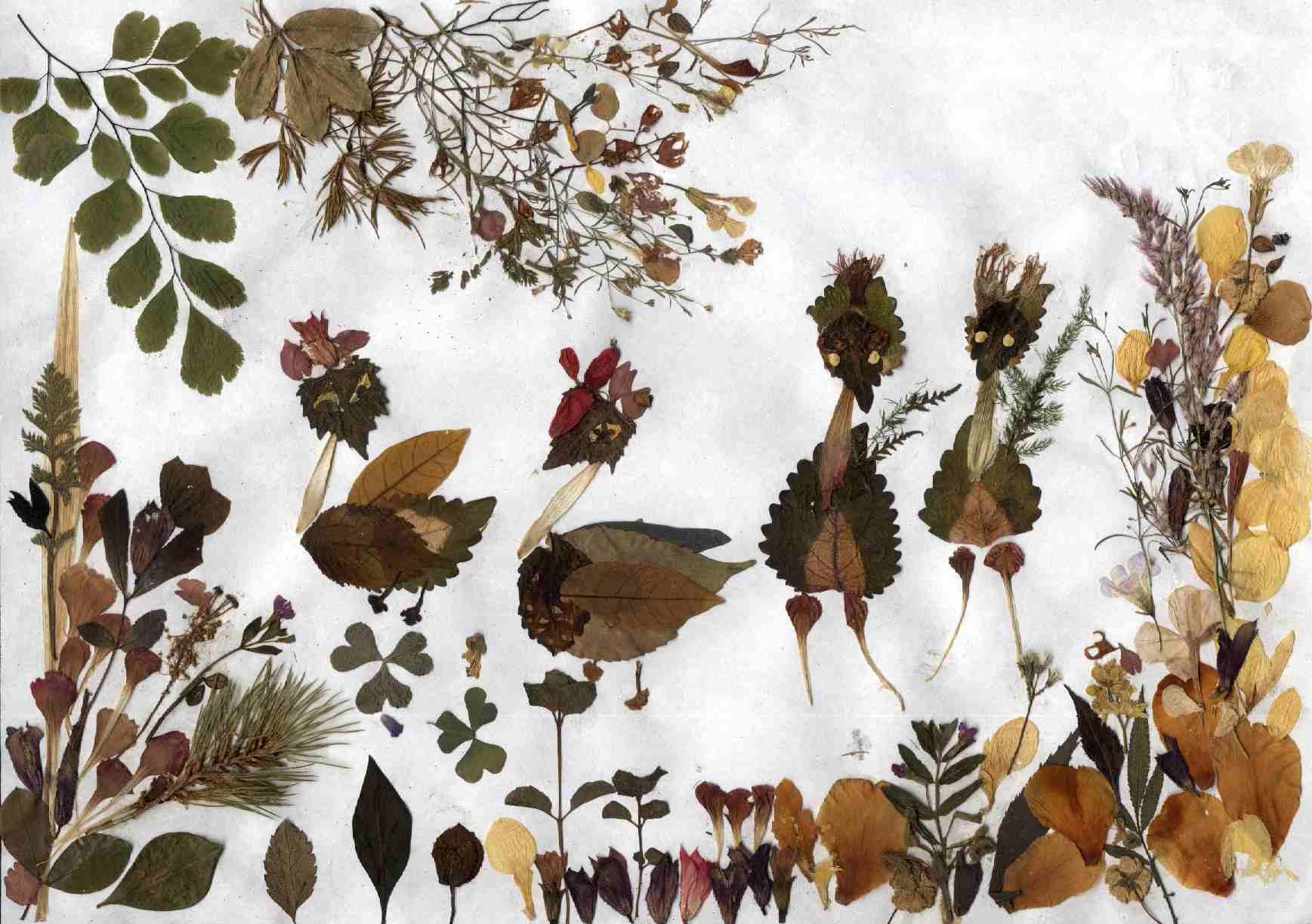 аппликация из засушенных растений фото соблюдать