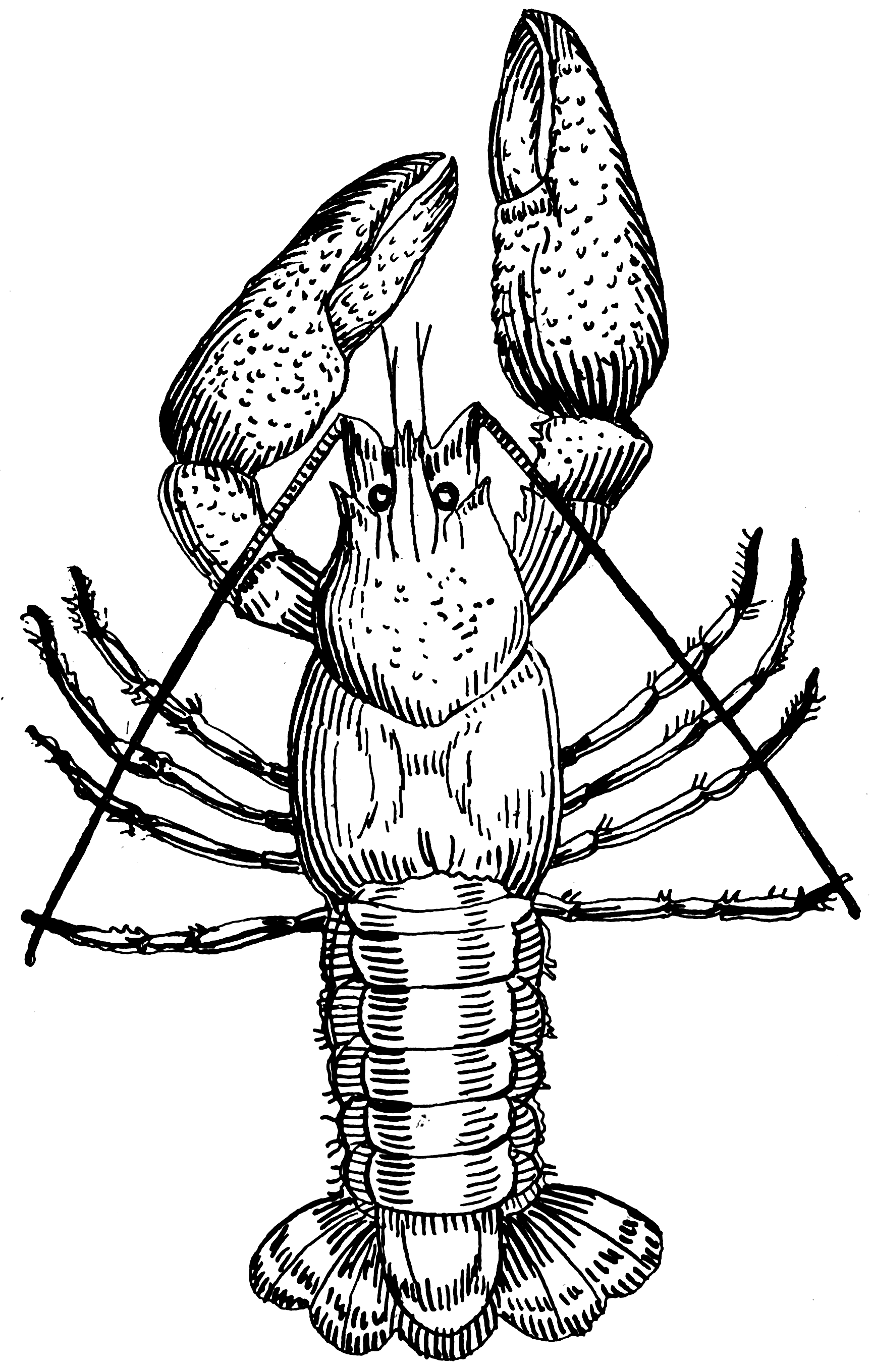 File:Crawfish (PSF).png - Wikimedia Commons