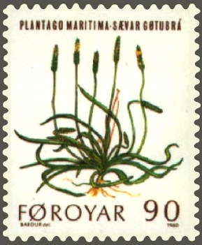 Description de l'image  Image:Faroe stamp 042 mountain flowers (plantago maritima).jpg .