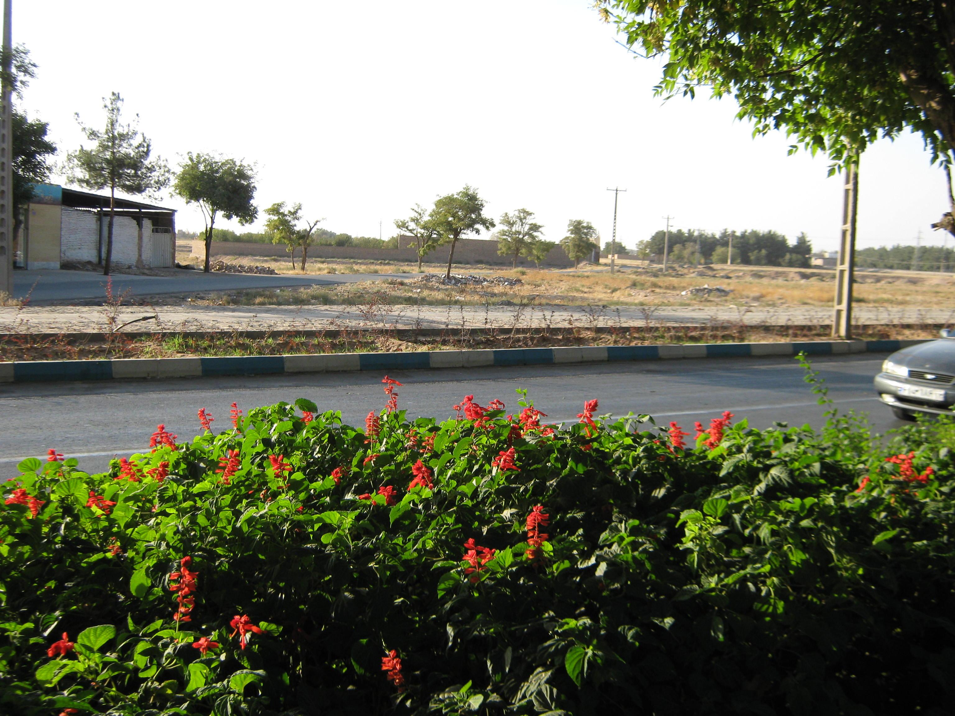 File Flowers of Barier Khayyam boulevard Nishapur 04 JPG Wikimedia mons